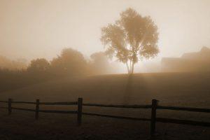 800px-sunrise_in_the_fog_7723